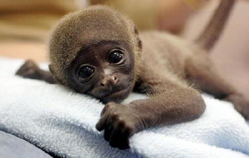 lovely-monkey.jpg